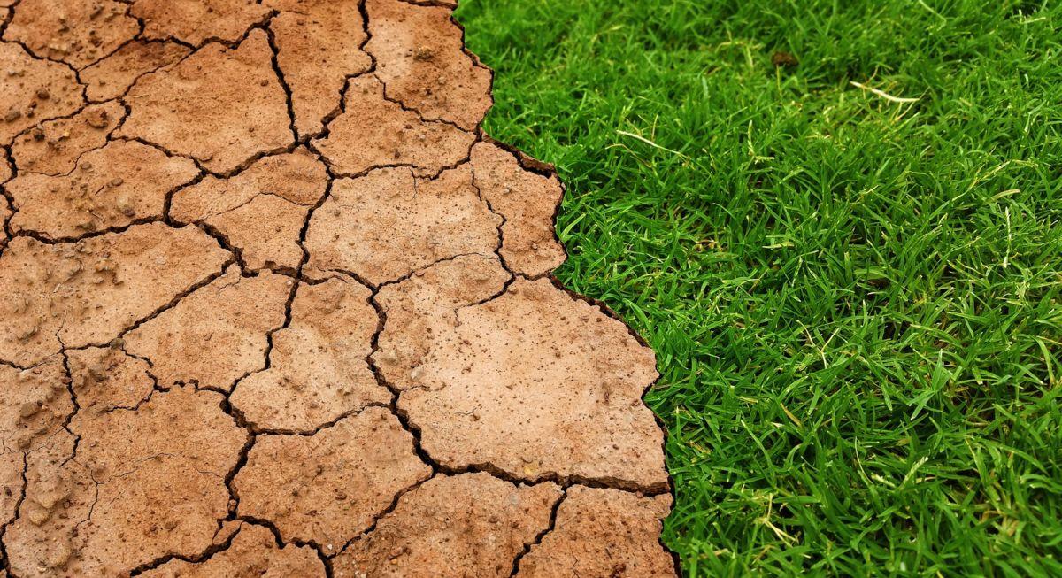 Trockene Böden und die Folgen